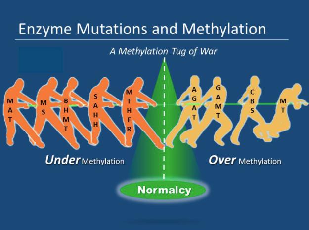 Methylation tug of war
